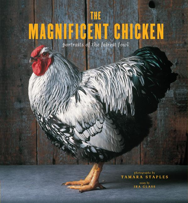 Exhibition: The Magnificent Chicken by Tamara Staples